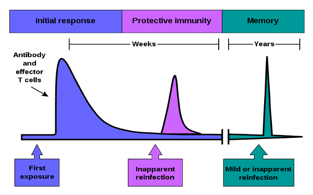 immune system response chart